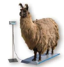 Salter Brecknell PS1000 Veterinary 1000lb Scale -- How much does a llama weigh?